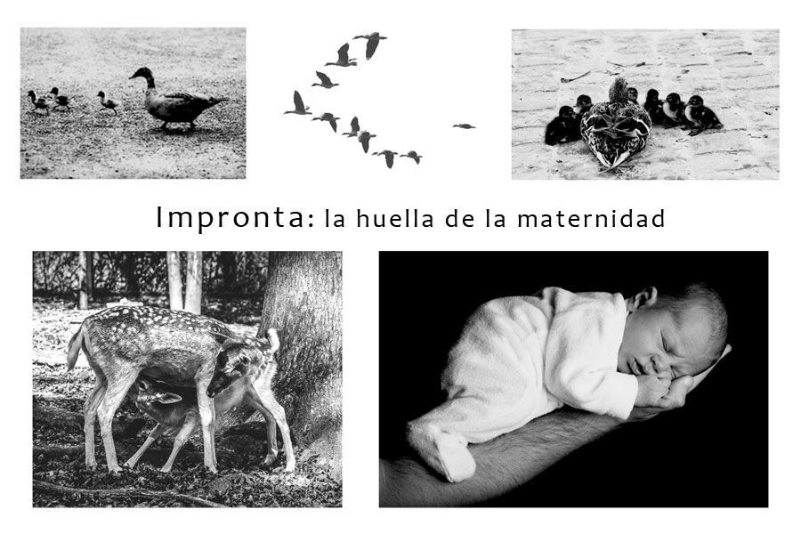 IMPRONTA: LA HUELLA DE LA MATERNIDAD.